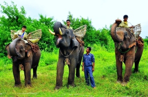 Need a picture here, and don't really have anything suitable, so ... let's have some elephants